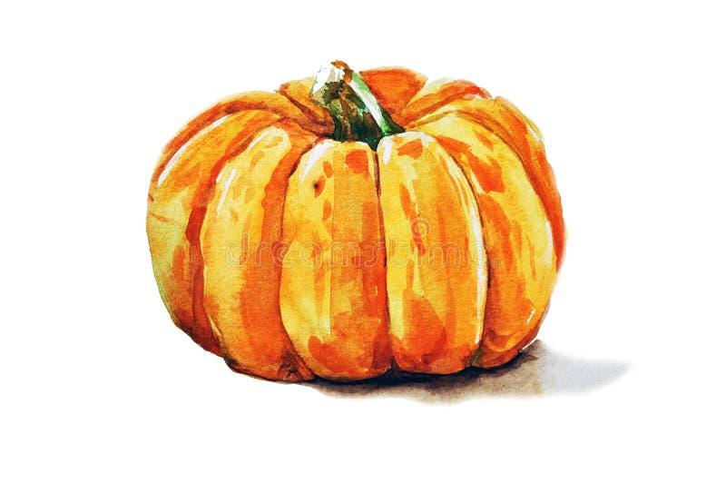 Watercolor pumpkin stock image