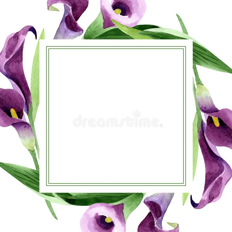 Free Watercolor Purple Callas Flower. Floral Botanical Flower. Frame Border Ornament Square. Royalty Free Stock Image - 124281776