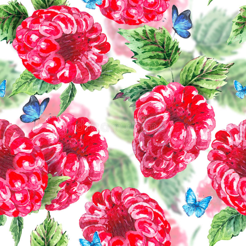 Watercolor raspberries seamless background royalty free stock images