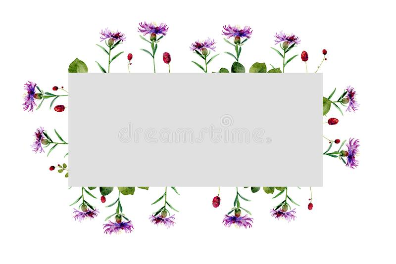 Watercolor rectangular frame of wild flowers thistle royalty free illustration