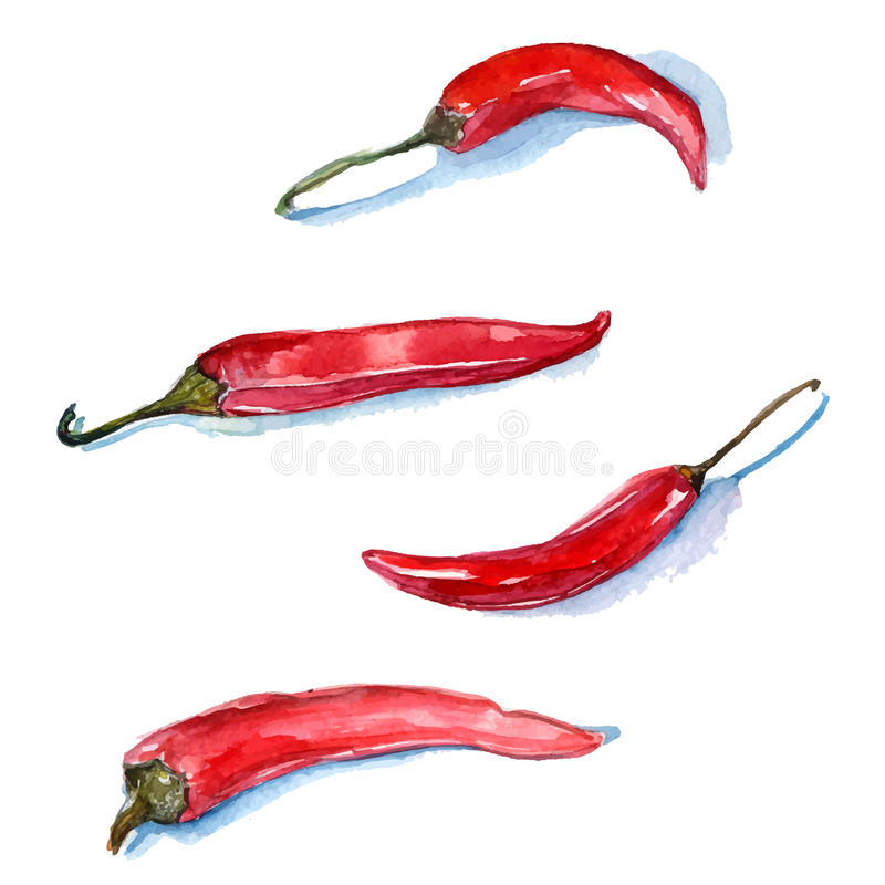 Watercolor red chili peppers. Vector food royalty free illustration