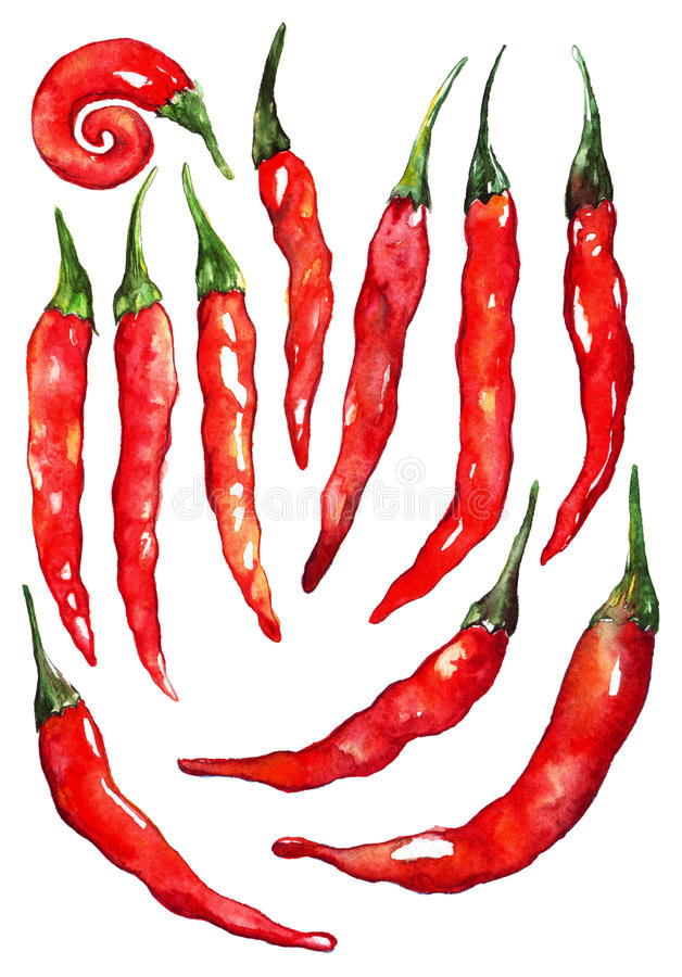 Watercolor red hot chili chilli spicy pepper set isolated stock illustration