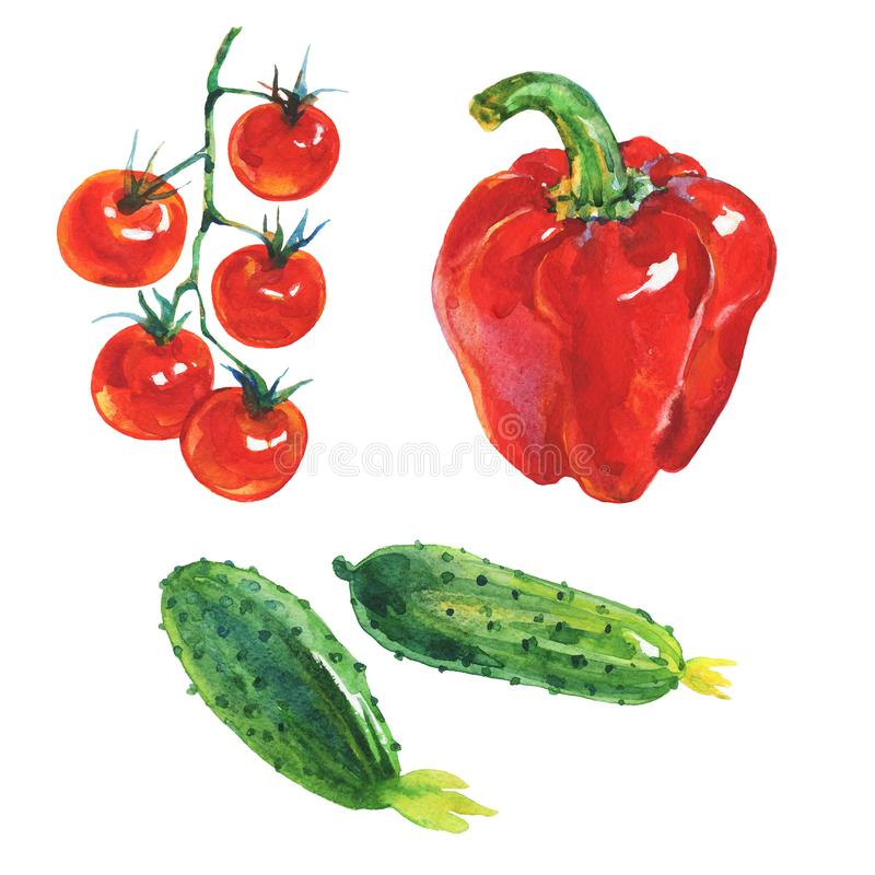 Watercolor red paprika pepper, cucumbers, cherry tomatoes vector illustration