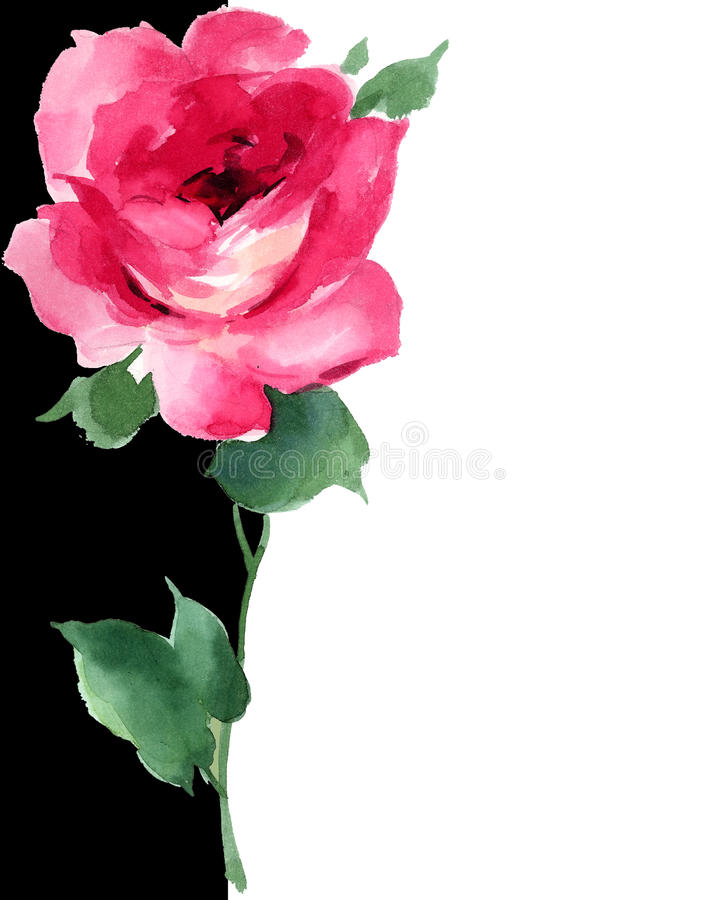 Watercolor Red Rose Floral Painting Art Deco Black And White Stock