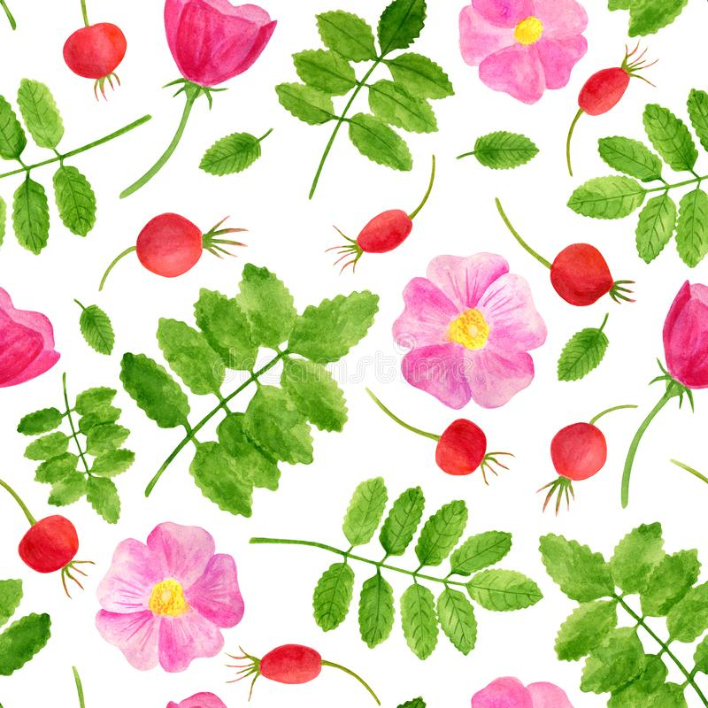 Watercolor red rose hips, flowers, leaves seamless pattern. Hand drawn background with green plants and brier berries. Floral royalty free illustration