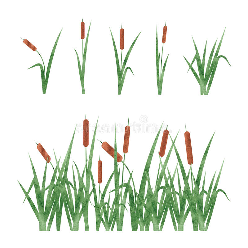 Free Watercolor Reeds Set. Royalty Free Stock Image - 75154076