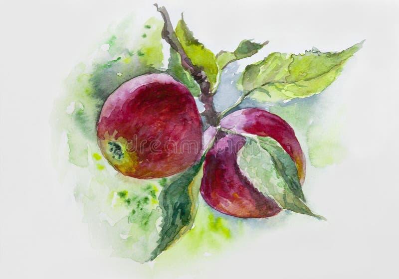 watercolor Reife rote Äpfel auf Niederlassung Malerei, Obstgarten, Fall, Niederlassung, Sonnenlicht, Tapete, reif, n stockfotos