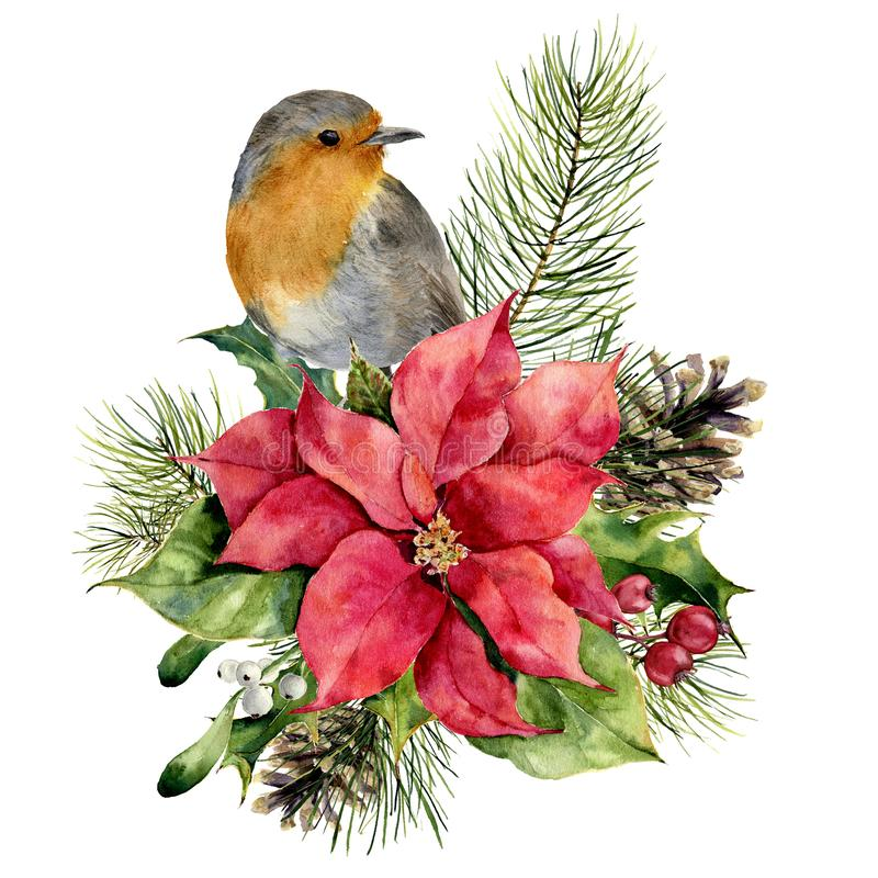 Watercolor robin, poinsettia with Christmas floral decor. Hand painted bird and traditional flower and plants: holly royalty free illustration