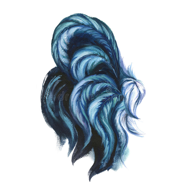 Watercolor rooster illustration. Blue rooster tail. royalty free illustration