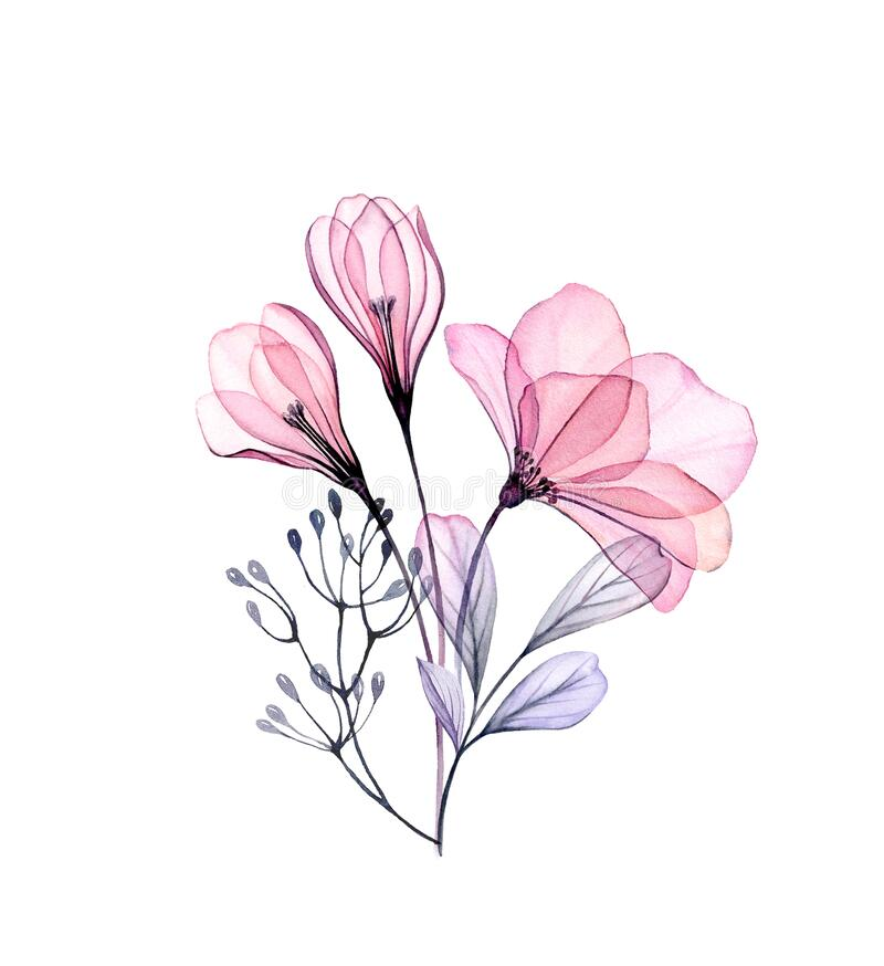 Free Watercolor Rose And Crocus Bouquet. Hand Painted Artwork With Transparent Spring Flowers Isolated On White. Botanical Royalty Free Stock Image - 181091286