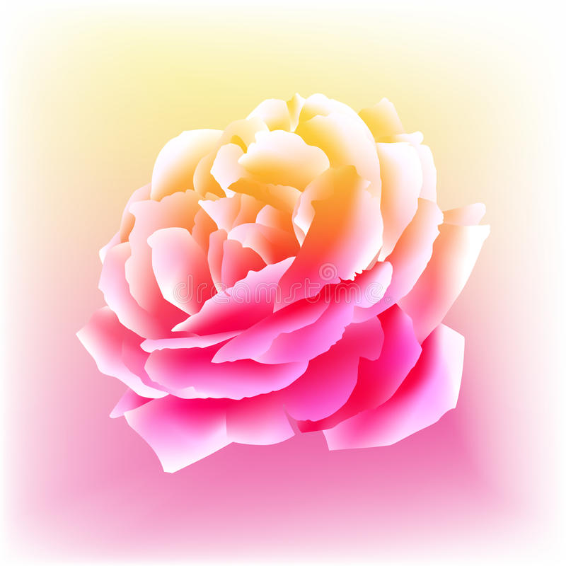Watercolor Rose Bloom. An image of a rose bloom in a watercolor paint style vector illustration