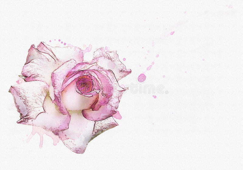 Rose watercolor background royalty free illustration