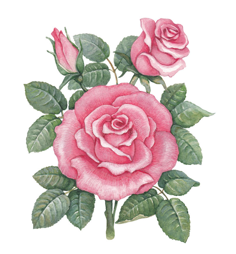Free Watercolor Rose Illustration Royalty Free Stock Photos - 30820618