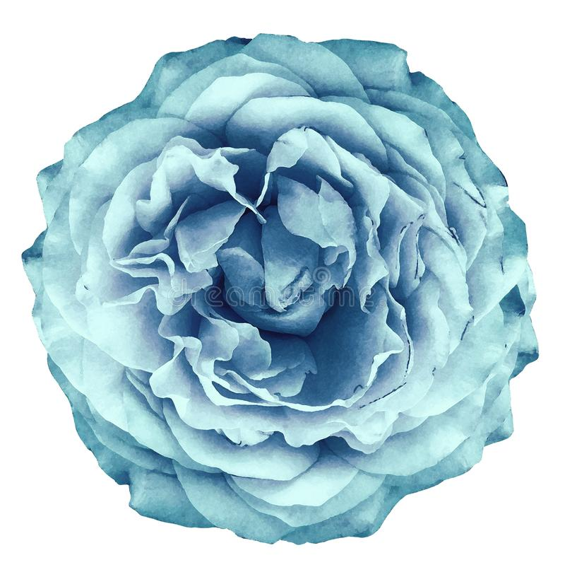 Watercolor rose light turquoise flower on white isolated background with clipping path. Closeup. For design. Nature stock photo