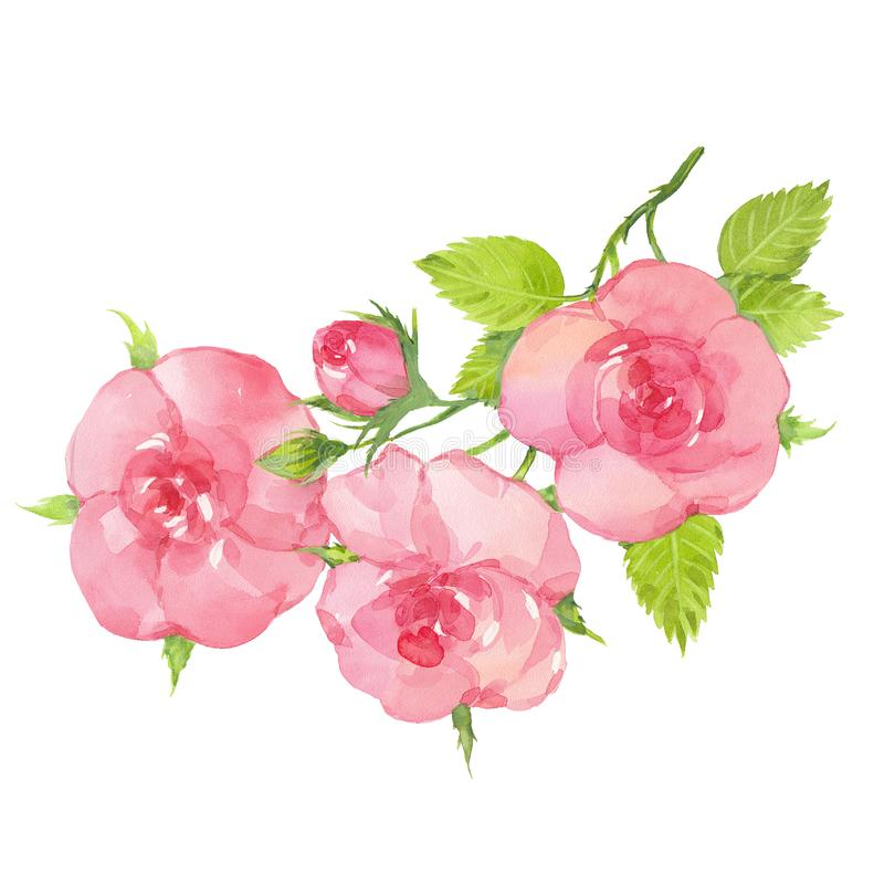 Watercolor rose twig vector illustration