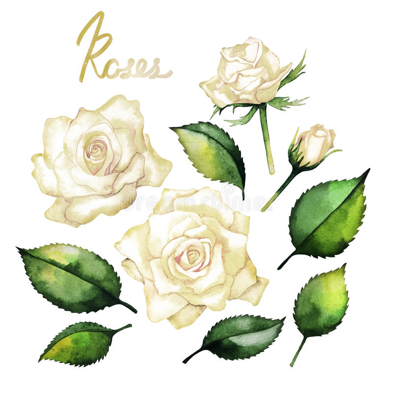 Watercolor roses collection royalty free illustration