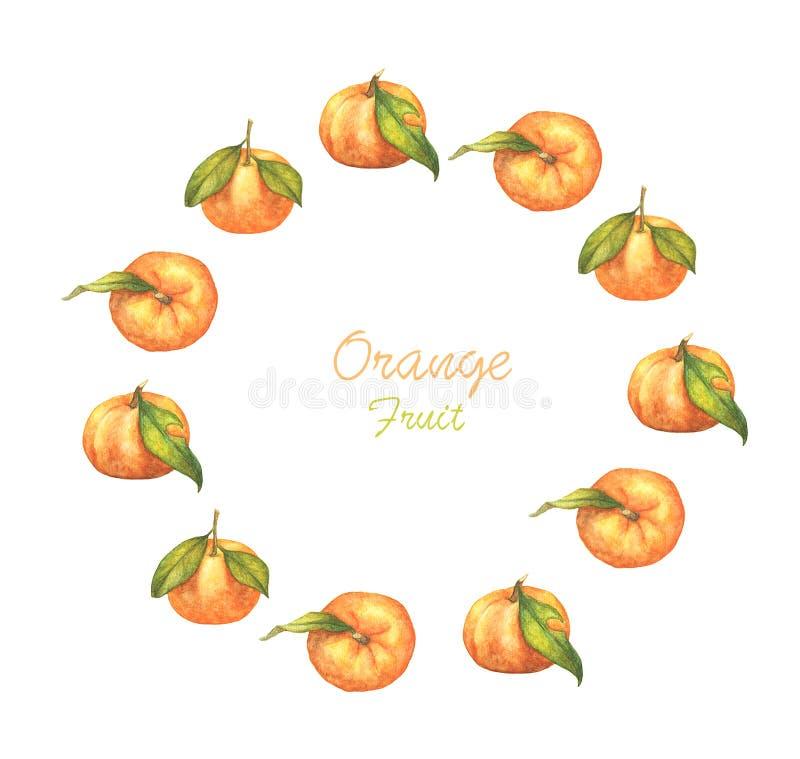 Watercolor round frame orange fruit isolated on white background. stock illustration