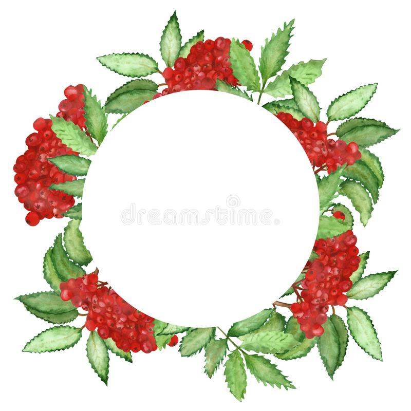 Watercolor round frame of red Rowan berries isolated on white background. Flower pattern for beautiful design of wedding invitations, greeting cards, saving royalty free illustration
