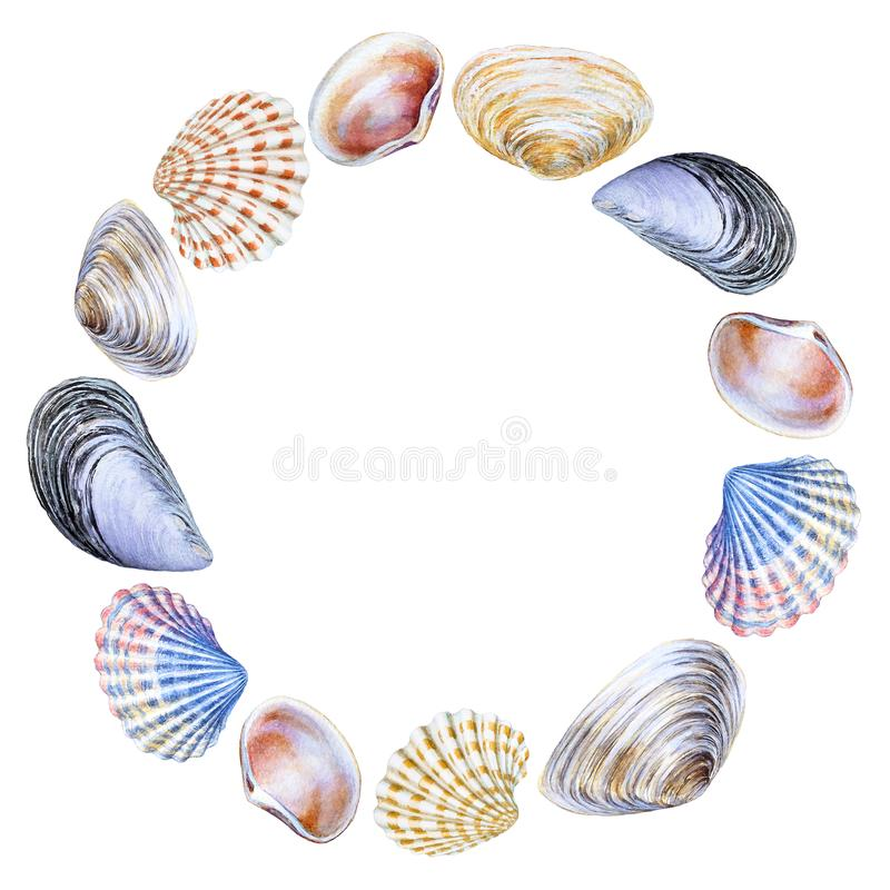 Watercolor round frame with sea shells with copy space royalty free stock image