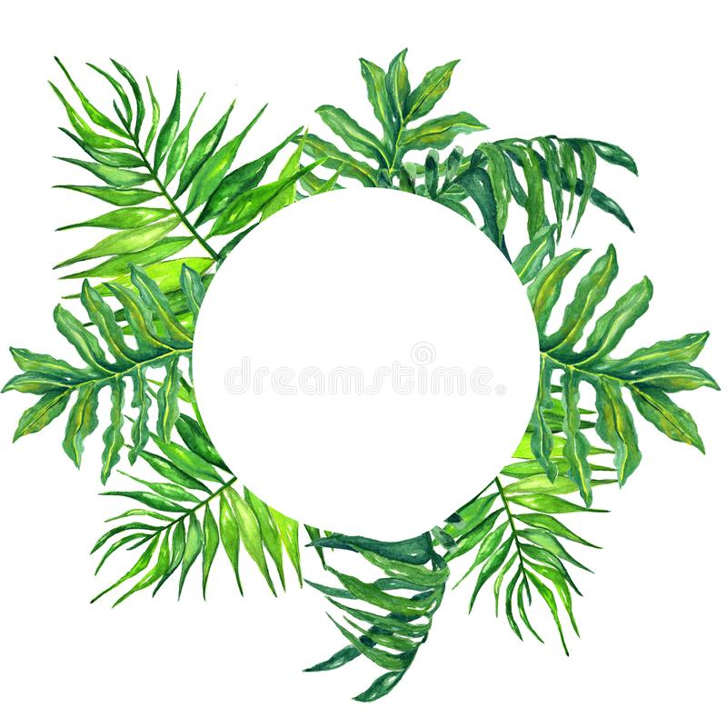 Watercolor round frame tropical leaves and branches isolated on white background!tropical green leaves frame! stock image