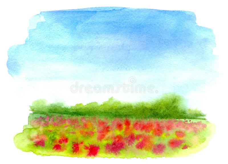 Watercolor rural landscape. Beautiful green field with red flowers and blue sky. vector illustration