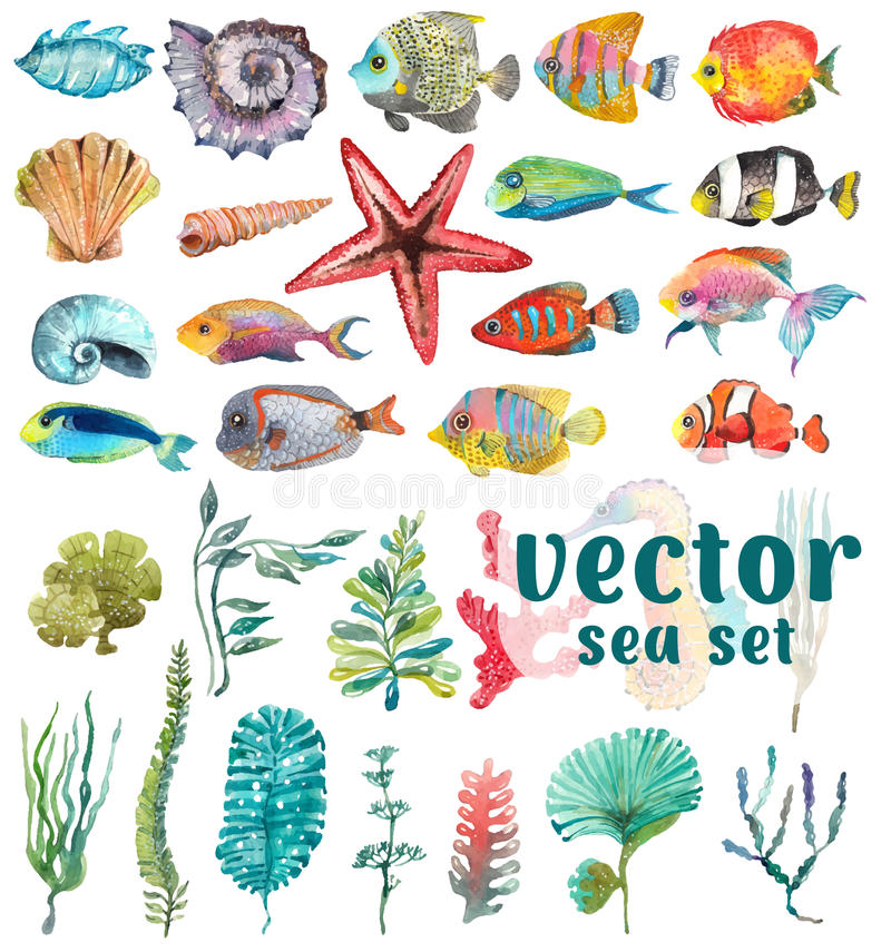 Watercolor Sea Life,Seaweed, Shell, fish. Watercolor Sea Life, Seaweed, Shell, fish, sea horse, beautiful collection for design royalty free illustration