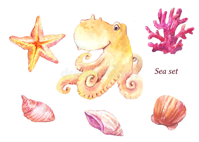 Watercolor sea set. Octopus, coral, starfish, shells, shellfish. Watercolor sea set. Octopus, coral starfish shells shellfish. Sketch isolated on white vector illustration