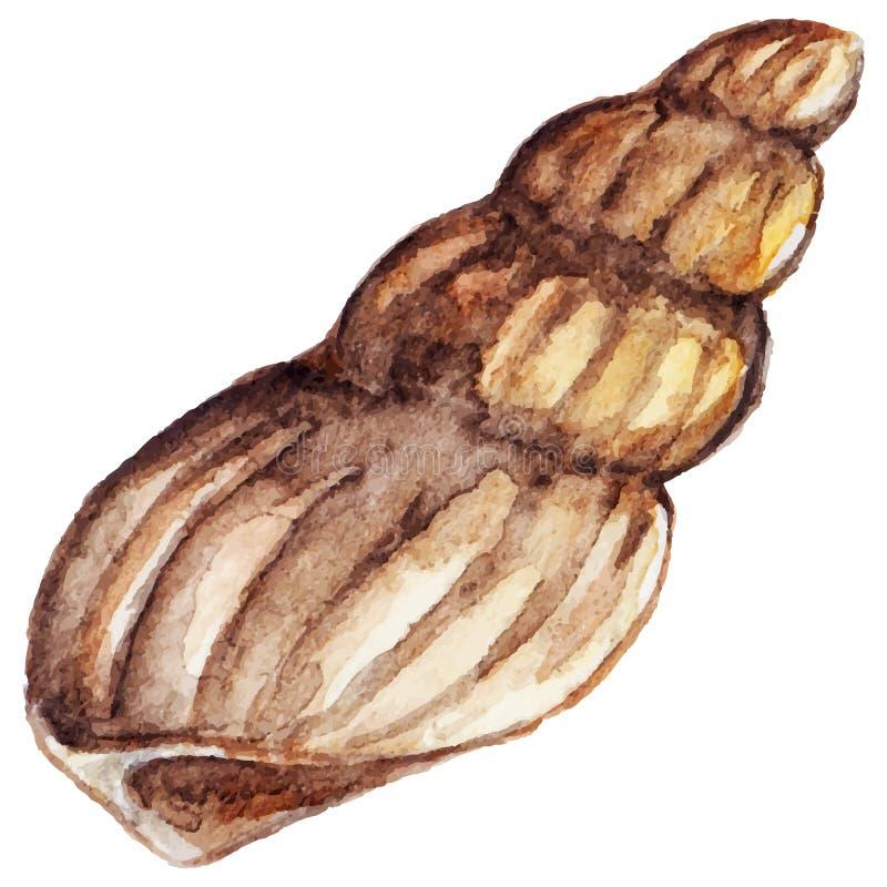Watercolor sea shell isolated clip art vector stock illustration