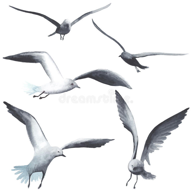 Free Watercolor Seagull Royalty Free Stock Photography - 56935687