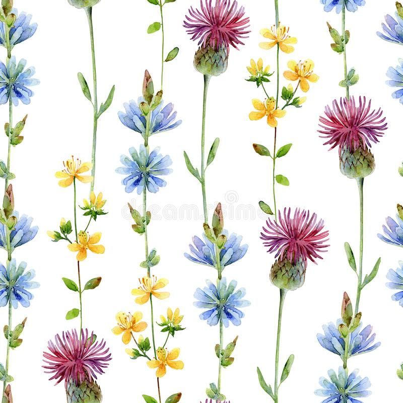 Watercolor seamless floral pattern with chicory, tutsan, and thistle vector illustration