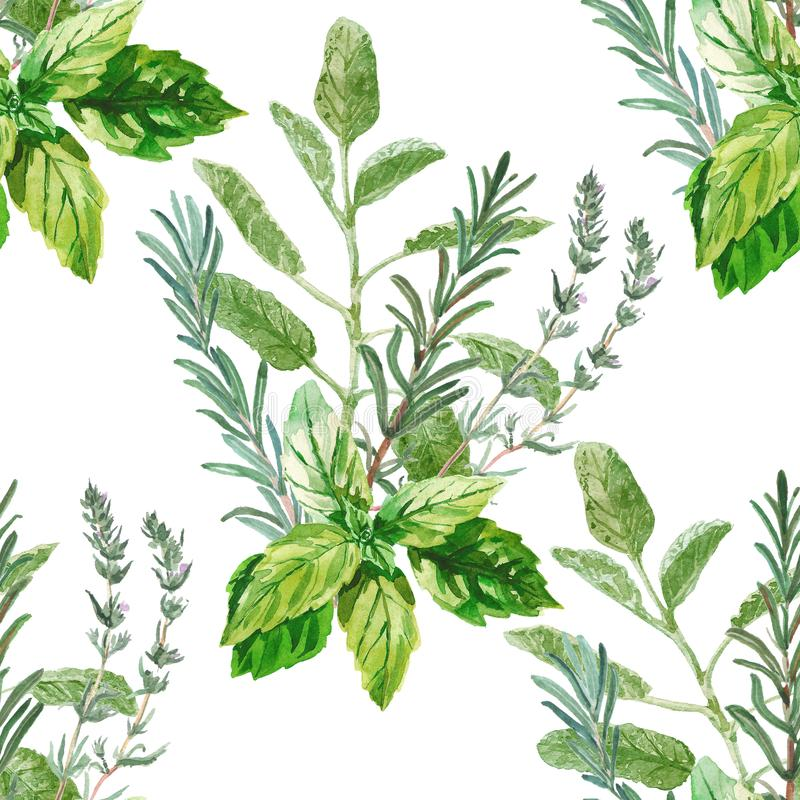 Watercolor seamless herbal pattern. Bunches of fresh culinary and medicinal herbs and branches. Basil, rosemary, thyme. Light modern watercolor floral design in vector illustration