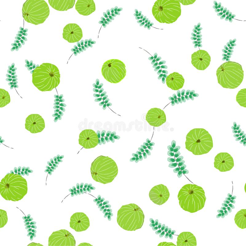 Watercolor seamless Indian gooseberry pattern, Phyllanthus embl. Ica or amla isolated on white background vector illustration