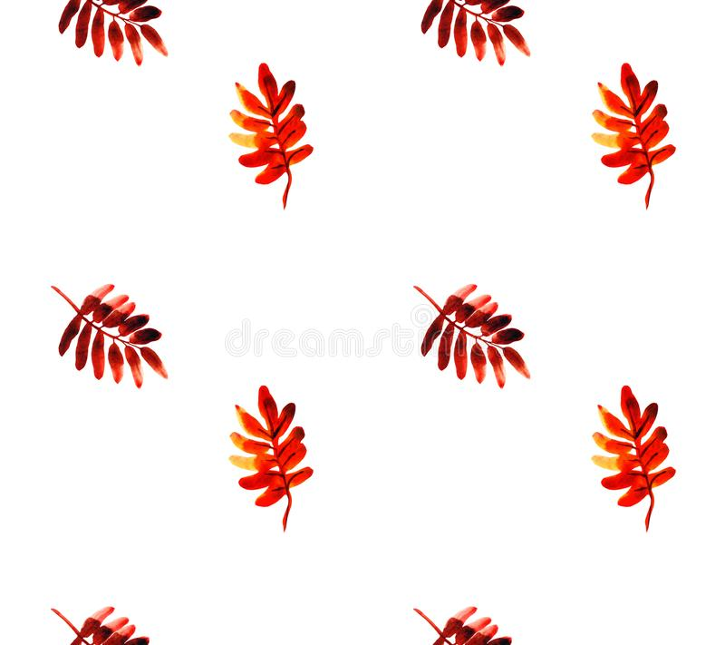 Watercolor seamless pattern of autumn rowan leaves, floral illustration on white background vector illustration