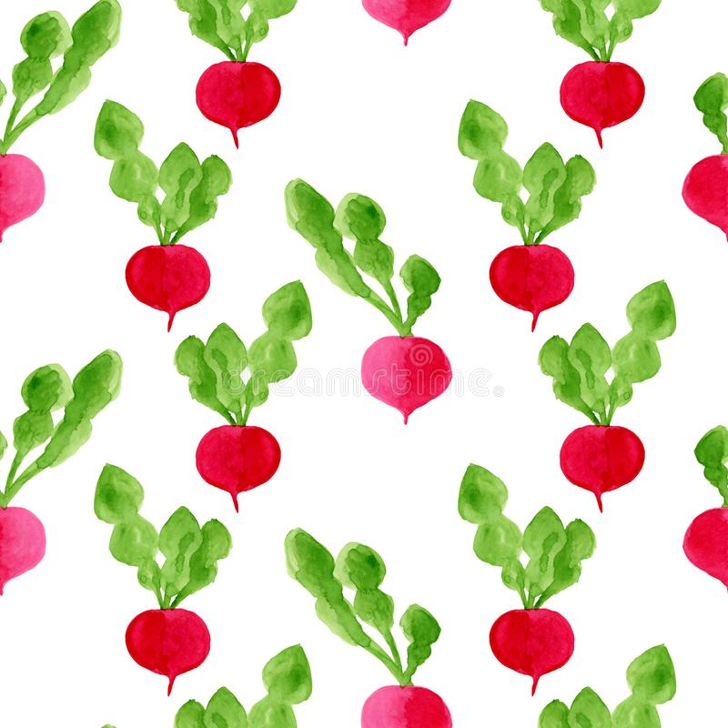 Watercolor seamless pattern background with radish. Hand drawn eco diet food illustration. Tasty vegetables isolated on white stock illustration