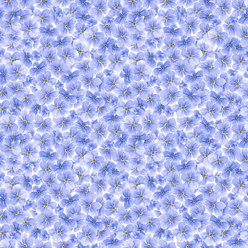 Watercolor seamless pattern with blue forget me not flowers royalty free illustration