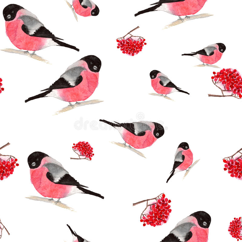 Watercolor seamless pattern with bullfinches and rowanberry vector illustration