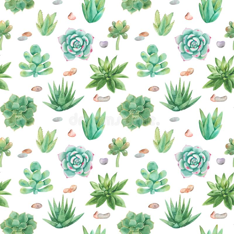 Watercolor seamless pattern with compositions of succulents, flowers. Texture for wallpaper, fabric, textiles, packaging, scrapbooking, wedding royalty free illustration