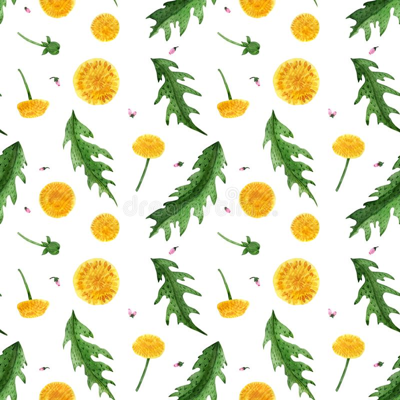 Watercolor seamless pattern of dandelion flowers and leaves royalty free stock photo