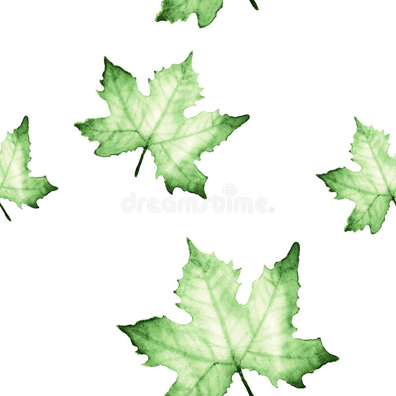 Watercolor seamless pattern with Green maple leaves. vector illustration