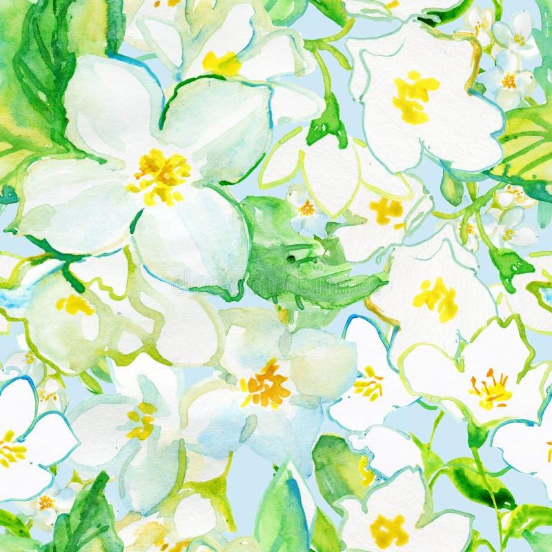 Watercolor Seamless pattern. Jusmine flowers vector illustration