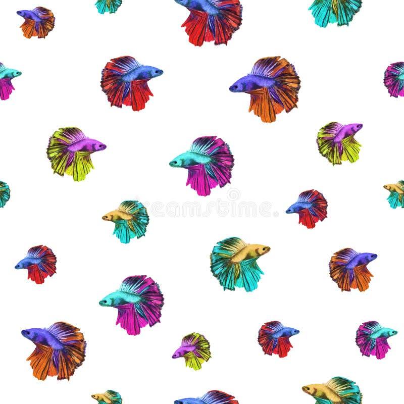 Watercolor seamless pattern of motley Betta splendens vector illustration