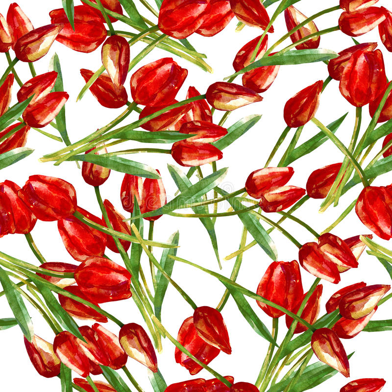 Watercolor seamless pattern with painted red tulips vector illustration