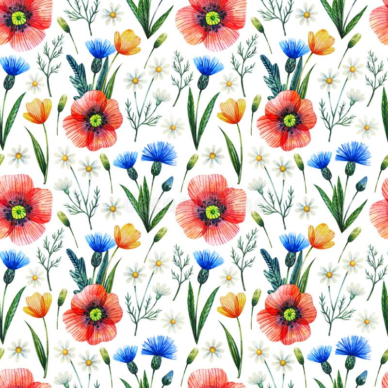 Watercolor seamless pattern with poppies. Floral background. Hand drawn summer flowers royalty free illustration