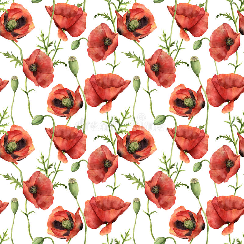 Watercolor seamless pattern with poppies. Hand painted floral illustration with flowers, leaves, seed capsule and vector illustration