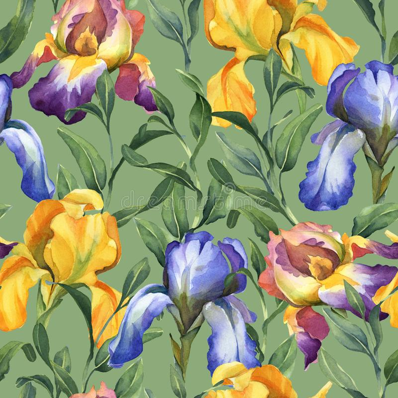 Watercolor seamless pattern with purple, yellow and blue iris flower and green leaves. On green background stock illustration