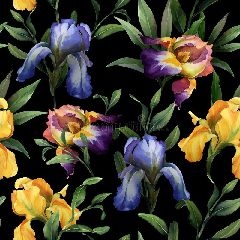 Watercolor seamless pattern with purple, yellow and blue iris flower and green leaves. On black background stock illustration