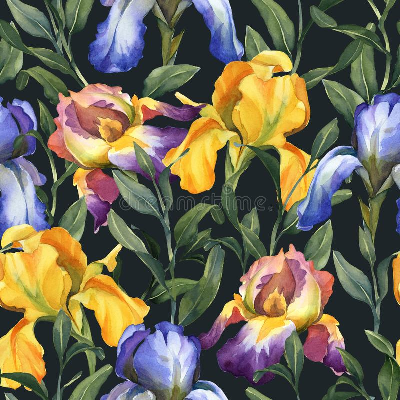 Watercolor seamless pattern with purple, yellow and blue iris flower and green leaves. On dark background royalty free illustration