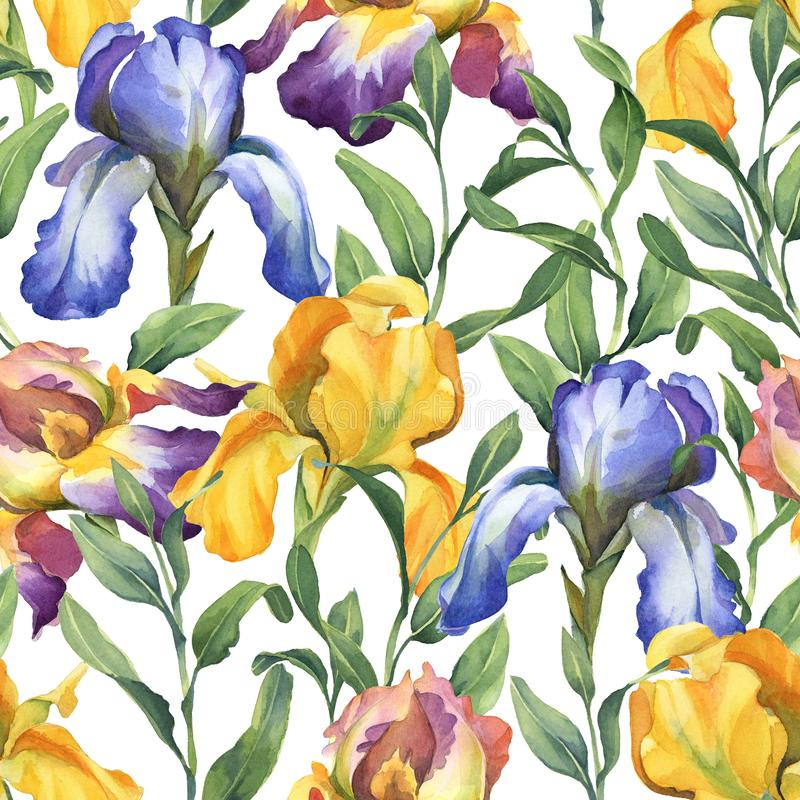 Watercolor seamless pattern with purple, yellow and blue iris flower and green leaves. On white background royalty free illustration