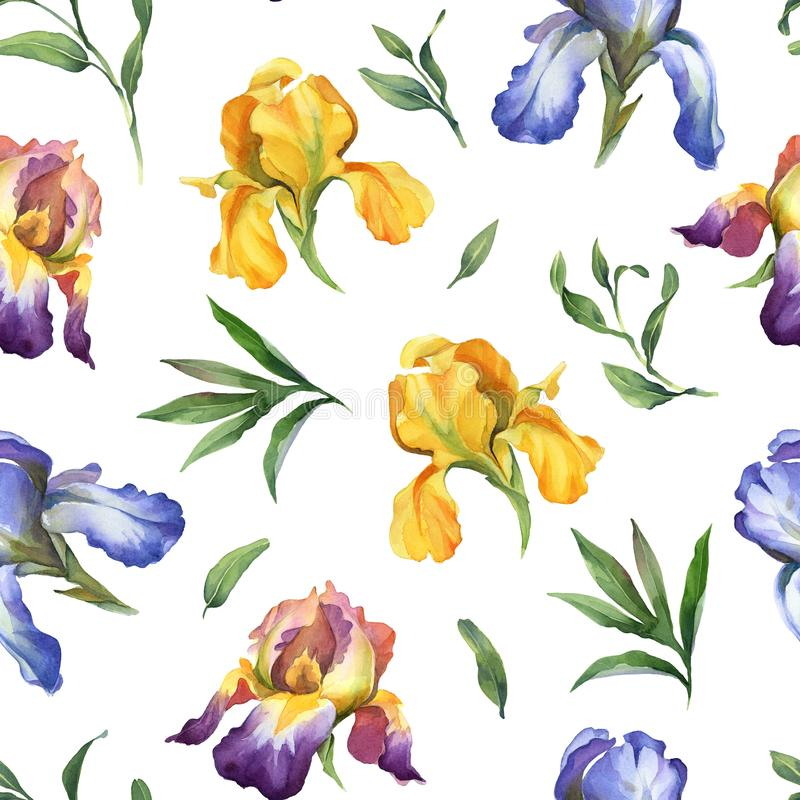 Watercolor seamless pattern with purple, yellow and blue iris flower and green leaves. On white background vector illustration