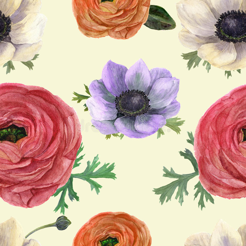 Watercolor seamless pattern with ranunculus and anemones. Hand drawn floral illustration with vintage background. Botanical illustration. For design, textile royalty free stock images